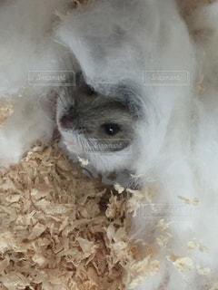 動物の写真・画像素材[146950]