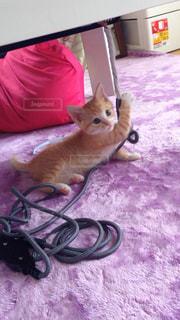 猫の写真・画像素材[146328]