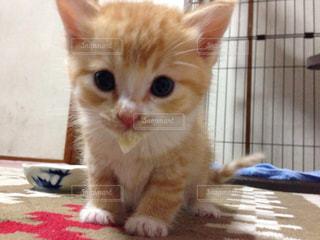 猫の写真・画像素材[146341]