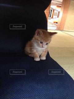 猫の写真・画像素材[146350]