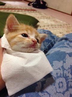 猫の写真・画像素材[146355]