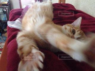 猫の写真・画像素材[146357]