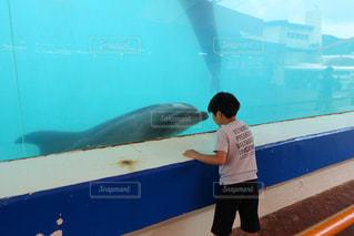 イルカに夢中の写真・画像素材[849553]