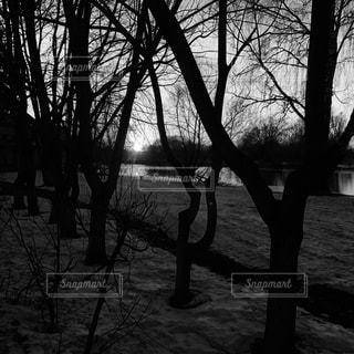 冬の写真・画像素材[147623]
