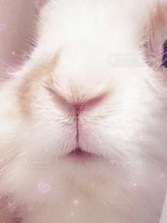 ウサギのお口の写真・画像素材[3449968]