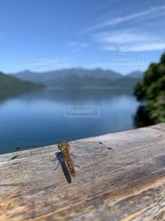 中禅寺湖とトンボの写真・画像素材[3562456]