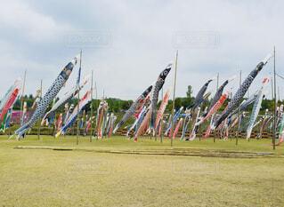 大漁大漁の写真・画像素材[4256088]