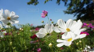 花の写真・画像素材[146863]
