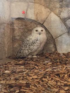 鳥の写真・画像素材[287285]