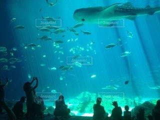 ジョージア水族館の写真・画像素材[3463731]