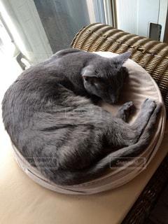 猫の写真・画像素材[147143]