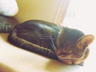 猫の写真・画像素材[147145]