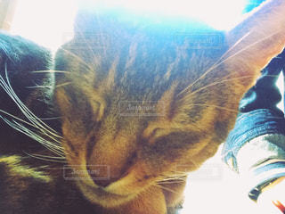 猫の写真・画像素材[147146]