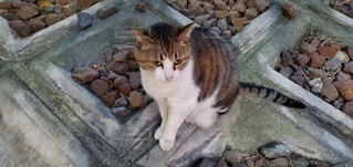 岩の上に座っている猫の写真・画像素材[3458014]