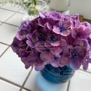 紫の紫陽花の写真・画像素材[3501084]
