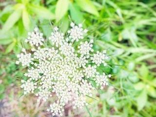 可憐な野草の花火の写真・画像素材[3498012]