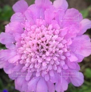 夏の花の写真・画像素材[3501492]