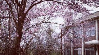 桜と校舎の写真・画像素材[4387868]