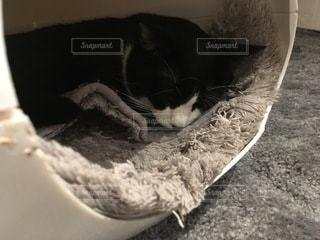 猫の写真・画像素材[3602543]
