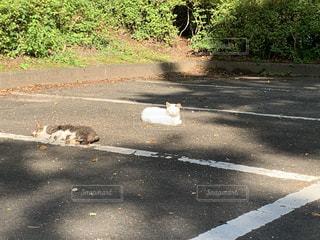 道路の脇に座っている猫の写真・画像素材[3556382]