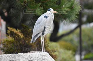 鳥の写真・画像素材[307731]