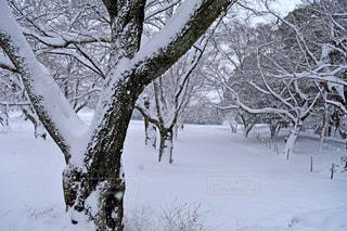 冬の写真・画像素材[314471]
