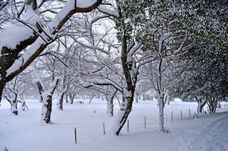 No.315699 雪