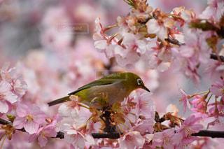 花の写真・画像素材[391940]