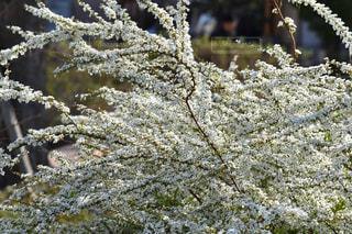 植物の写真・画像素材[409780]