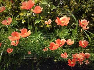 花の写真・画像素材[440983]