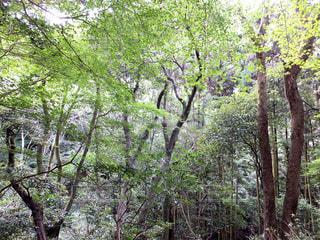 森の写真・画像素材[464735]