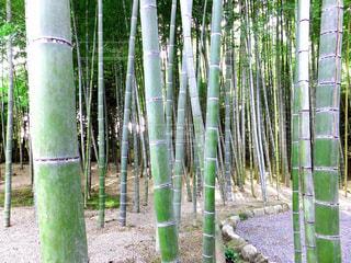 京都の写真・画像素材[465154]
