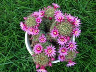 No.491031 ピンクの花