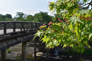 No.494075 京都