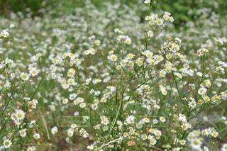 花の写真・画像素材[578843]