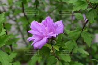 花の写真・画像素材[579733]