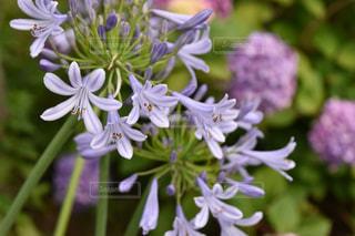初夏の花の写真・画像素材[592300]