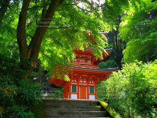 京都府の写真・画像素材[596132]