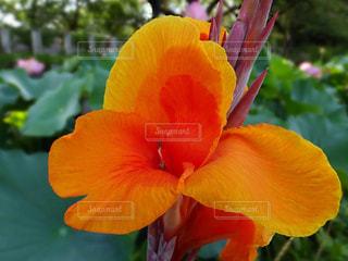 花の写真・画像素材[613622]