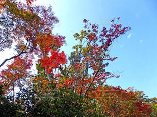 生け花風に見える紅葉の樹木の写真・画像素材[853494]