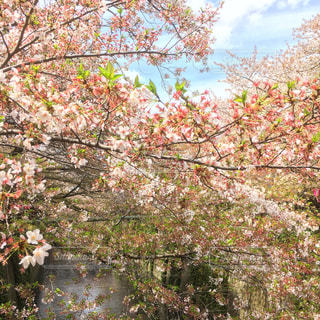 花の写真・画像素材[147823]