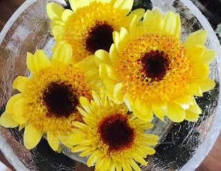 花の写真・画像素材[151918]