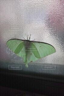緑の傘の写真・画像素材[3699859]