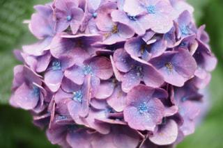 花の写真・画像素材[246322]