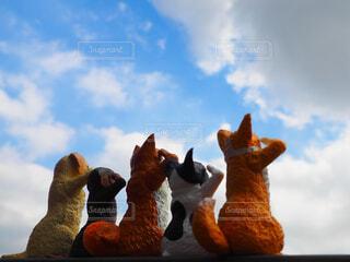 敬礼する犬たちの写真・画像素材[3931060]