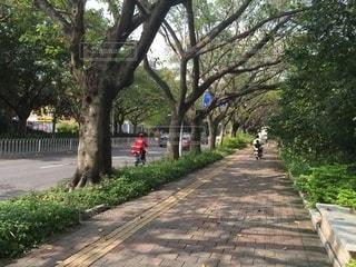 中国深セン市南山区蛇口の写真・画像素材[3476766]