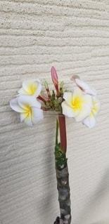 葉より先に花が咲きましたの写真・画像素材[3479335]