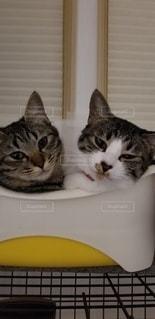 仲良し親子猫の写真・画像素材[3479408]