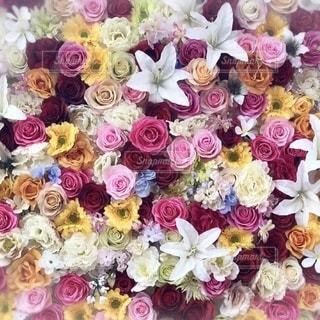 彩り豊かな花々の写真・画像素材[3478845]