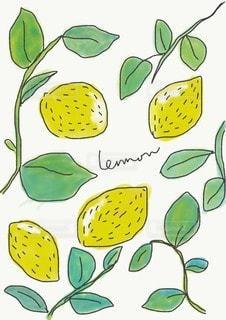 レモンのイラストの写真・画像素材[3484345]